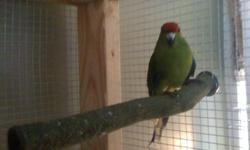 large family lots of room and experience with many types of birds our birds get lots of free flight time around home and we have large flight cages we feed fresh fruits and veg as well as seed let us know what you have and we hope we can help