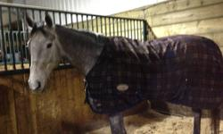 -Beautiful 16.1hh 5 year old grey Appendix gelding.  -Has shown up to 1.0M at Anderson and Spruce - he has a big jump and can definitely go higher -Currently in professional training -Super willing and honest - he will jump anything for you -Excellent