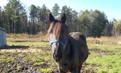 I have a 10 year old thoroughbred/dutch warm blood stallion.  He is black with three white socks.  Beautiful and well mannered horse.  Broken in and I had been riding him.  Last three years haven't done much with him due to lack of time, I work full-time