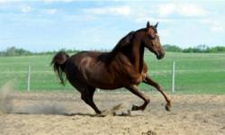 Royden Arabians - open to all breeds. Indoor/Outdoor arena. Two barns. washrack. Indoor, private, semi-private, and pasture boarding available. Go to http://www.roydenarabians.com or call 780-984-9604 for more information and pricing.