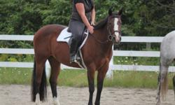 Aqha show mare 15.3hh shown English and western great beginners horse. She does everything. This ad was posted with the Kijiji Classifieds app.