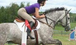 Gandalf?s Magic is a 7 year old, welsh thoroughbred cross, 15.3 H dapple grey gelding. He is athletic, bold and brave.Barn name: Wizard.   In 2011 Wizard qualified for Trillium Championships in both the 0.9m and 1.0m  jumpers with his 13 year old rider.
