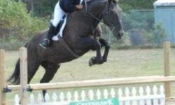 Do you have a horse that is a pain to catch? Or an aggressive horse? Hi, my name is alysha. I am 15. I'm offering my training services. I can break young horses, retrain older horses, train for a certain discipline , work with problem/aggressive horses,