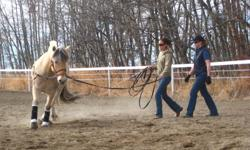 Chris Irwin double gold certified trainer, Lisa Wieben, has openings for fall/winter training near Olds/Bowden (Eagle Hill Area).  Foundation training for the unbroke horse,  or  fine tuning of the green or older horse. All breeds. English or Western.
