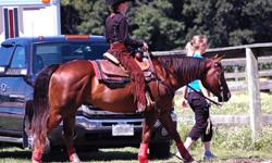 Western trainer located near Camrose available to train your horse. I have been riding horses for probably 20 years or more. I've shown in western performance classes, gymkanna events, and reining. I spent two years at the University of Guelph getting my