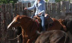 Horse Training- All horses(including stallions), mules, and ponies(over10hh) are welcome.  My training program uses safe humane methods to give you a willing partner.  I specialize in Western Riding (Reining, Barrels, Cowhorse) but all horses