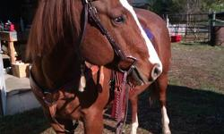 I have 5 very nice, confident mature horses I would like to offer for lease.  In my lease I offer the horse of your choice, good quality well fitting saddles and correct bridles, full feed and care is provided aswell as hoof trims and scheduled deworming.
