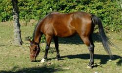 Turner Stables located on Main St in Dartmouth currently has a few horses available to experienced riders. We offer 50 acres of beautiful trails, and a small field to ride in as well. All horses are well behaved and road safe but some are only green broke