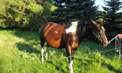 3 horses for sale.   The first is a registered paint mare, born in 1999. Very nice temperment, well broke, easy to catch. With colt by side. 14.1 Hands High.    Second horse is a registered quarter horse stallion. Born in 1999. Halter broke, green broke