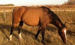 We have 5 horses for sale. We have a 7 year old buckskin mare, an 8 year old grey pony (mare), a 2 year old sorrell filly, a 6 month old appaloosa stud colt and a 6 month sorrell pony (stud colt). We are excepting offers on them individually or as a