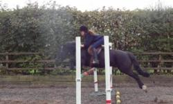 I have a couple of horses and ponies offered for sale. I am not in a rush to sell these horses, I will take my time and sell them to the right home that suits these horses. These horses are ridden and worked with daily at a riding stables, looked after