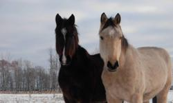 I have provided as many photos as kijiji will allow. There are more horses needing homes than what is shown here. They have all been saved from selling for slaughter at horse and cattle auctions. They are healthy and sound horses. Please don't buy into