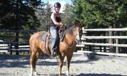 4 year old AQHA mare.  Lightly started under saddle but very very steady.  She has been out in the trails and has done some arena work.  Very quiet, soft energy, loves attention, gets along extremely well with other horses.    Georgie is always watching