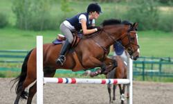 Hello! As a result of my horse aging, I have recently decided to purchase a new mount. I am open to purchasing yearling or two year old with correct conformation, who are hunter jumper prospect. I am also open to purchasing a registered hunter/jumper mare