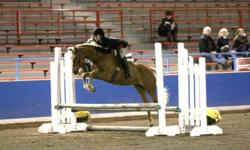 """Fancy Welsh/X Hunter/Jumper Pony """"A"""" Circuit potential Beautiful 13.2 1/2h 8 year old sorrel mare Solid walk trot canter shown 2010/2011 Always in the ribbons No bad habits,very sweet natured 7500.00 or  reasonable offer 604 626 1114 This pony is one in a"""