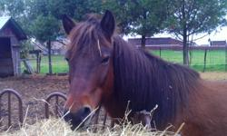 24 year old mare breed lives into late 30's.  She is great on trails and rides english, western, and bareback, she alo jumps.  Neighbours granddaughter raced barrels with her at fairs. She tolts.  UTD on shots and farrier.  Also was just seen by equine