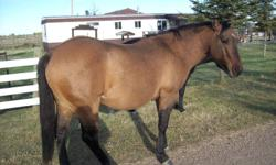 i am no longer working and need to sell a few horses i am taking offers on all horses.  1.registered buckskin dun stud coming 4 never bred anything would make an amazing cattle horse/gelding or stud hes on allbreedpedigree.com DOCS MAJOR PEPPA.  2.