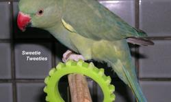 I have a few Indian Ringneck Parakeets that are looking for their new home.   Please note: -Indian Ringnecks have a long life span.  If you can not foresee keeping one for its entire life, please do not contact me. -Indian Ringnecks have the capability to
