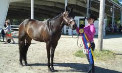 Invited Too Krymsun is a 2001 gelding standing 15.2hh. He has been shown in Halter, Showmanship, Pleasure and Horsemanship. He is a third brother to One Hot Krymsun and has had several accomplishments himself such as: 2010 MQHA Novice Youth Halter Grand