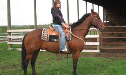 Registered bay gelding, 15 years young, amazing horse, side passes, backs turns on haunches, neck reins. Previous ropeing horse, has done cattle penning, he is very cowy, was also in 4-H. You would never no he was 15 he looks like a 10 year old and he has