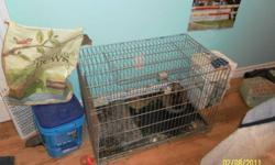 Fletch is a siemese sable jersey wooly rabbit who is almost 4 years old . He is neutered and is really calm. Hes been around little and older kids since he was a baby. Fletch was previously used for showing in 4-H. This guy comes with his papers. cage and