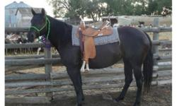 This beautiful mares name is Xena. She ride just as beautiful as she looks. Is very easy to bit and halter. She stands very politely for you to saddle her. She enjoys to work when given the right directions. This mare has lots of pep in her step and wants