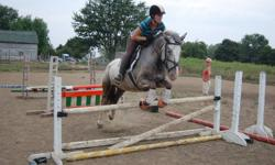 Sparkle is a 14.2 appy cross mare. She is a blast to ride. Goes walk, trot, canter and easily jumps a course. This pony LOVES to jump and will jump practically anything. Would be suitable as a jumper or eventer. Has shown in the hunter ring as well and