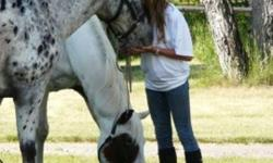 Just Ride, Just Play, Just Stay, Just immerse yourself in HORSES, HORSES, HORSES! Pick your horse for the week! Come just have FUN with horses, no pressure - recreational riding at its finest We teach horsemanship from the ground up, round pen demo's,