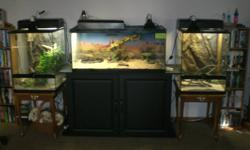 I have 2 , 1.5 year old Beardies with cage and fixtures . $550.00.  One  2 year old Crested Gecko with cage and fixtures $150.00 Also 2,  2.5 year old Bearded Dragons with cage , stand and fixtures $600.00 My House is looking to much like  a pet store..