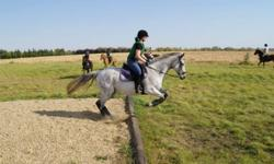 1998 15.2 Grey TB Gelding, very handsome and kind.  This level headed horse is great for any age rider, you can take him from the arena to the cross country field and back to the arena again without losing his cool! Very athletic he has the ability to