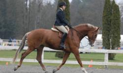 KWPN mare Lovely personality, great blood lines, very flashy. Chestnut lots of white and lots of chrome. Has been to a number of A and B circuit horse shows, with pro and amateur riders. Huge step, flying changes, baths, clips, hauls.$5,500 OBO Please e