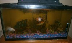 I have for sale a large fish tank with light and  newer filter there are 4 large goldfish that go with the tank and some ortaments.