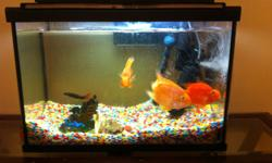 3 large parrots fishes and 1 medium size parrot fish, orange-yellow in color. 20 L aquarium fully equipped included.