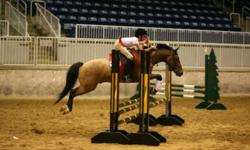 Gemini is a been there done that large pony. He is 9 year old QHxWelsh, 14.1hh pony. He's done it all! Whether you want a childrens pony or a large pony hunter, Gemini is your pony! He has shown on the SW Trillium Circuit in the Large Pony division and