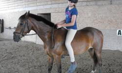 7 years old, 13.2 h.h., Welsh/Hackney.   He loves to jump and w/t/c beautifully. Excellent for vet and farrier. He is very willing to please and loves to spend his times on trails. Sadly our kids have outgrown him, he will do well with an intermediate