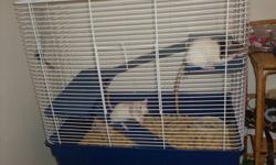Hi, I am selling this cage with the rats because I no longer have time for them, I am a full time student now and me or my children are never home for them..The cage was bought from pets unlimited for 129.99... They are great girls and have never