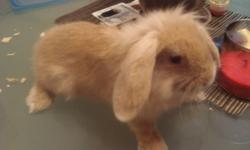 Born: August 15, 2011. Age: Female I can't take care of this bunny any longer. About 2 months old. The bunny is 50 dollars. She's litter trained. It's really soft and fluffy, and good with kids. If you want the cage it'll be 40 dollars more. The cage is