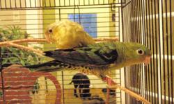 i have a pair of proven linnies, green/tuquoise male ,  edged female,  both banned 09