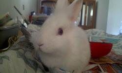 i have a beautiful white rabbit with blue eyes for sell. the rabbit likes to be active and be enertained, this rabbit needs to be cared for and go to a loving home. reason for selling is i dont have time for it.   call 905 282 9767 or email