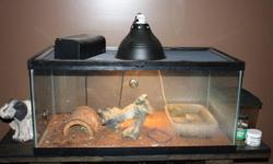 Green Basilisk Lizard, 1 year old; including 55 gal. tank with screen lid, UV light, heat lamp, heat pad, water bubbler and pump, a few tank accessories (like log, etc.) - everything you need to own a lizard   Purchased everything for over $600