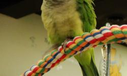 """Come and see our selection of locally raised tame birds! Teri's Pets Plus Dog Wash 613-779-6106   Our current flock includes: Green Quaker Parakeet - """"Yoshi"""" - just weaned, confident babyWhite Face Cockatiel - """"Tipper"""" - hand fed baby - new arrivalLutino"""