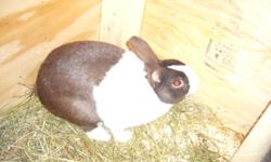 im looking for dutch rabbits, only does, and color but black and white, around a year old, cant be fixed. will trade for other rabbits or buy for a reasonable price. like the ones in the pictures.