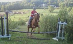 My name is Melissa, and i am  finally getting a job, now that i will be making money i am looking for a horse, My history with horses is i have been riding for about 13 years, i am an Advanced rider. I am looking for a tall, and slightly heavey built