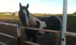 Looking to board my 7 yo Paint gelding for the winter. I have to move him from his current stables (we have a limit of 2 horses per family and I am temp boarding him as a 3rd) I could take him home to my acreage but I don't want him here alone and I don't