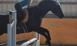 **Hello, I?m an Open/ Novice rider & I?m looking for a horse that will take me though my divisions in showing. I would like to do jumper and I would like to have a horse that will help get there. But also a friend I can grow with (and won?t grow out of)**