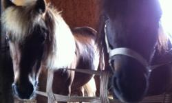 We bring ponies to birthday parties and delight young children. We currently have 2 ponies and 2 horses, and would like to purchase a few more ponies. Pony needs to be a gelding or mare (no studs please), at least 4yrs old and not bigger then 11hh. Health