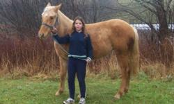 hi im trying to find this mare she is the first horse i ever owned and would like to know how she is doing thats all. not looking to buy her back or anything just want to know if she is still alive and how she is doing.if you have seen this mare or have