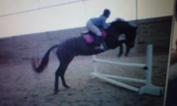 hello, My name is kristen im 15years and looking for part time job. I have 8-9years experience doing farm work and working/riding horses.   I have trained horses from a rescue called m&e for a whole summer and at many other barns i have boarded at before,