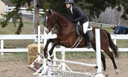 Registered Dark Bay 5 yr old (April 2006) 16HH TB Mare Unmissable (Missi) Talented, rising star with incredible natural ability. Quiet, fwd, honest mare. Natural balance, straight mover with outstanding work ethic. Three smooth gates, lead changes, large