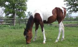 Hello   I am planning on moving to kingston December 1st. I need a place for myself to live as well as my horse.  Also just a field with a shelter would be fine too. I can do all the work. I dont mind doing chores at all. Right now I work at a horse farm